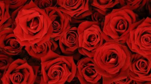 Este San Valentín: Quiere a los demás, pero también… ¡Aprende a querer y mimar la piel de tu cuerpo!