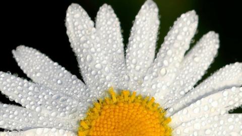 Repara los daños del invierno en tu piel y comienza bien la primavera con Medical Spring Special Beauty